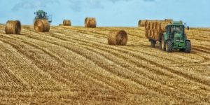Francie sklizeň